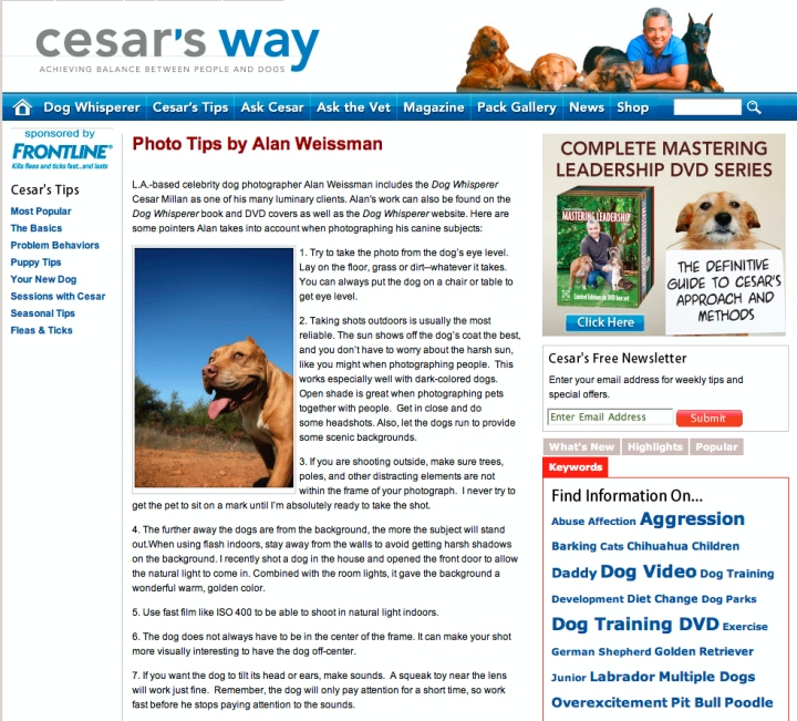 photo tips for dogs 2